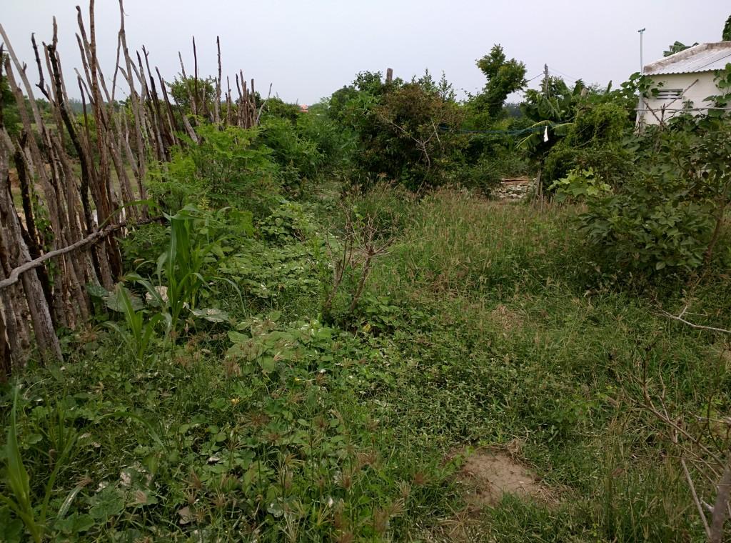 Khu vườn để cỏ phát triển tự nhiên chưa có các biện pháp kiểm soát